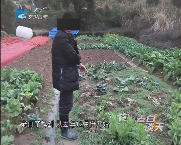"""卖菜的竟是个偷菜贼 货源自己从田里""""进"""""""