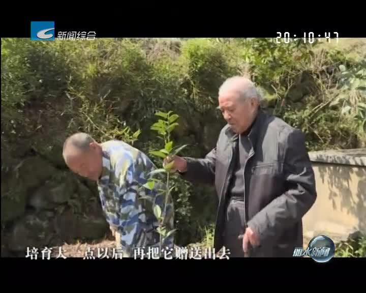 最美丽水好人:八旬老人捐赠千株桂花苗 为美丽云和增绿添彩