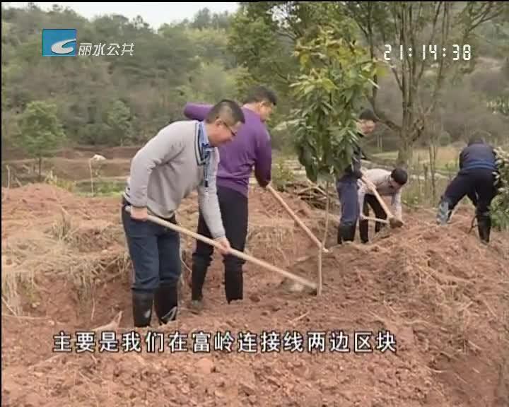 植树造林好时节 党员干部齐种树