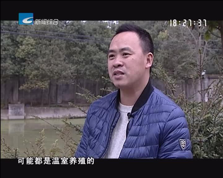 【创富人才】卜伟绍:养鳖创业 此生不悔