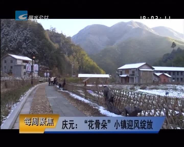 """【每周聚焦】庆元:""""花骨朵""""小镇迎风绽放"""
