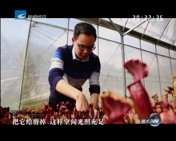 """《筑梦·新时代》:投身""""三农"""" 90后小伙把冷门植物卖成""""网红"""""""