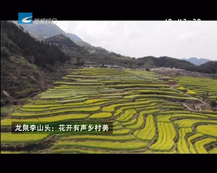 【一起去旅行】龙泉李山头:花开有声乡村美
