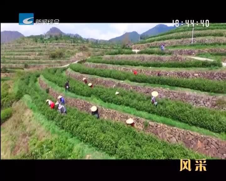 【风采】松阳:以节为媒 推动茶产业发展