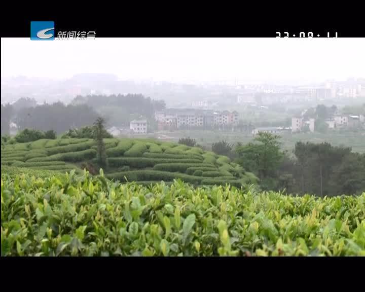 """""""干在实处""""松阳:碳中和项目落户松阳 助力茶产业绿色发展"""