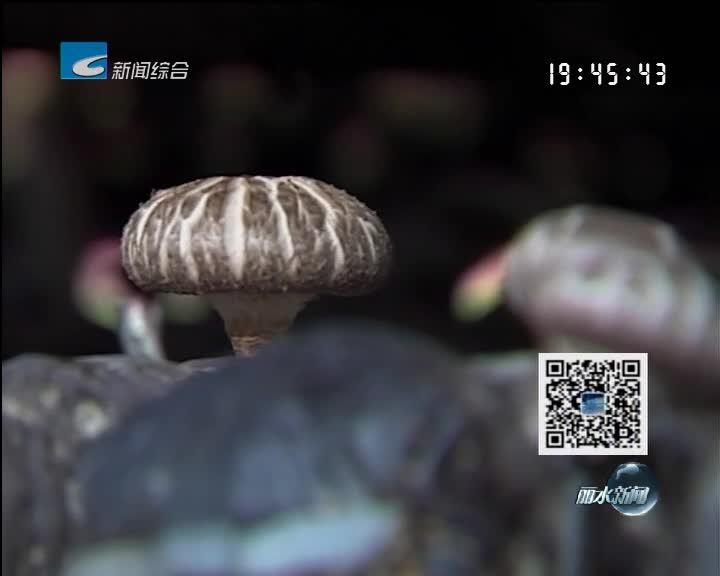 问政回顾:庆元:传统香菇产业发展遭遇瓶颈