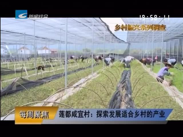 【每周聚焦】莲都咸宜村:探索发展适合乡村的产业