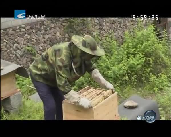 [百姓热线]土蜂蜜囤积家中 蜂农寻求买家
