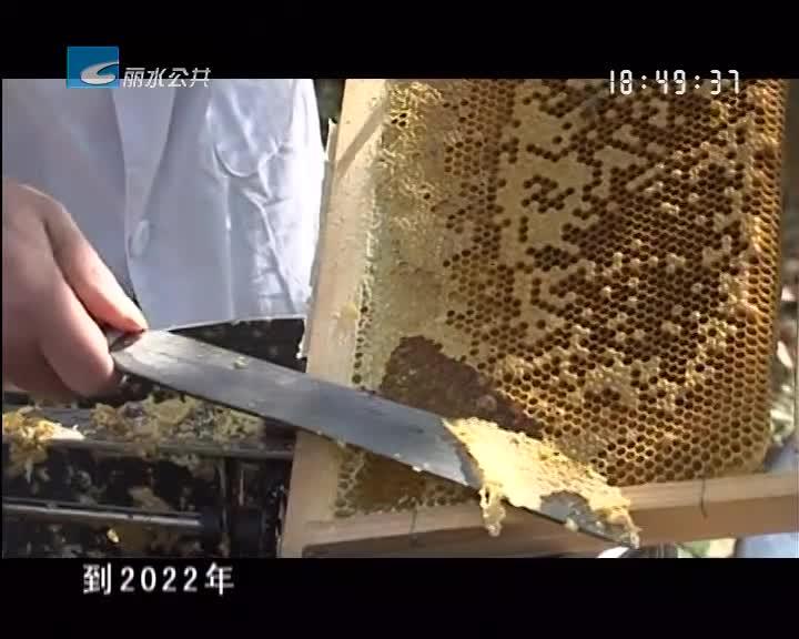 """【世界蜜蜂日】10个亿! 我市蜂业发展定了个""""小目标"""""""