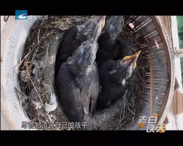 与鸟同住 我们要注意什么?