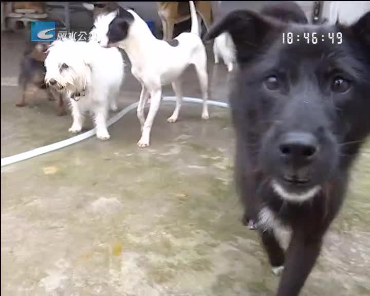 流浪狗基地招募志愿者 呼吁市民文明养犬
