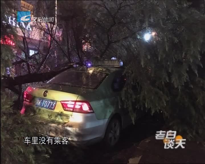 突发!行道树突然倒下砸中出租车