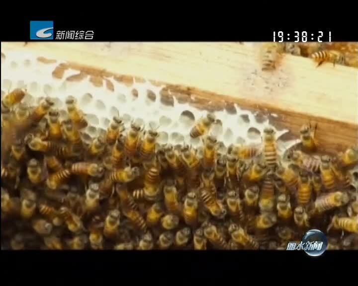 """丽水金名片:中国蜜蜂之乡 :养蜂成为农户的""""甜蜜事业"""""""