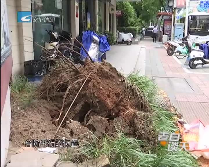 行道树把车砸了 谁该负责(一)