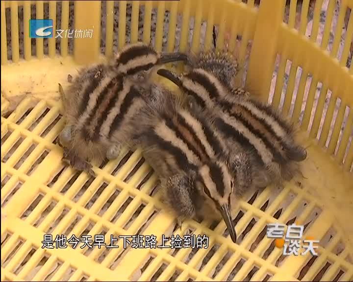 市民捡到三只幼鸟 林业专家建议放回原处