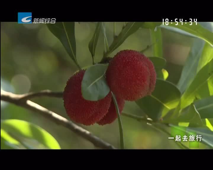 【一起去旅行】六月青田:龙舟竞渡 杨梅红熟