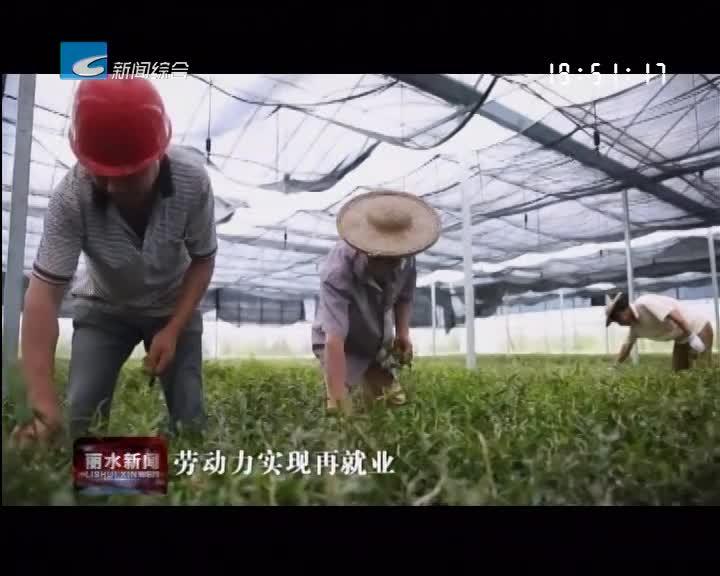 乡贤助推乡村振兴:陈思铨:种植铁皮石斛 带着村民一起致富