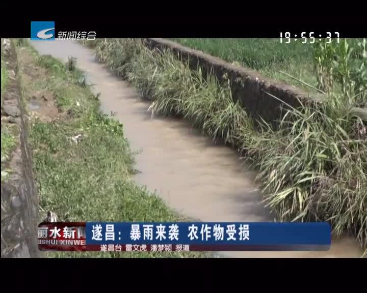 遂昌:暴雨来袭 农作物受损