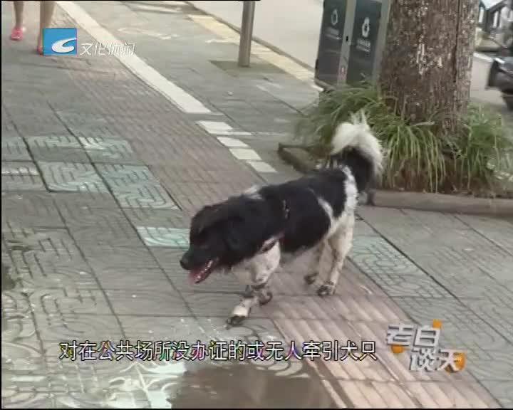 老白讲文明 养狗问题多 管理存盲区(三)