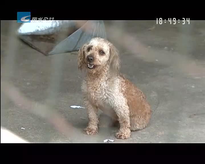 """【关注流浪狗】救助城市遗弃狗 给他们一个温暖的""""家"""""""