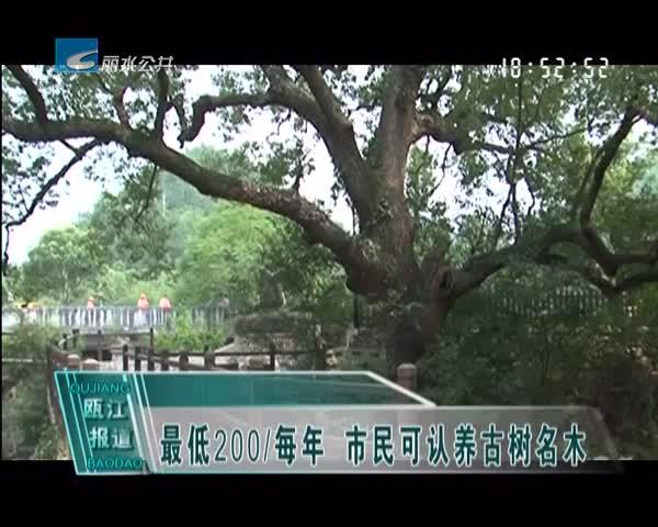 最低200/每年 市民可认养古树名木
