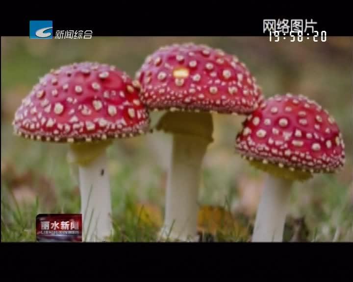 提个醒:有人误食毒蘑菇致死 市民切勿随意采食野生蘑菇