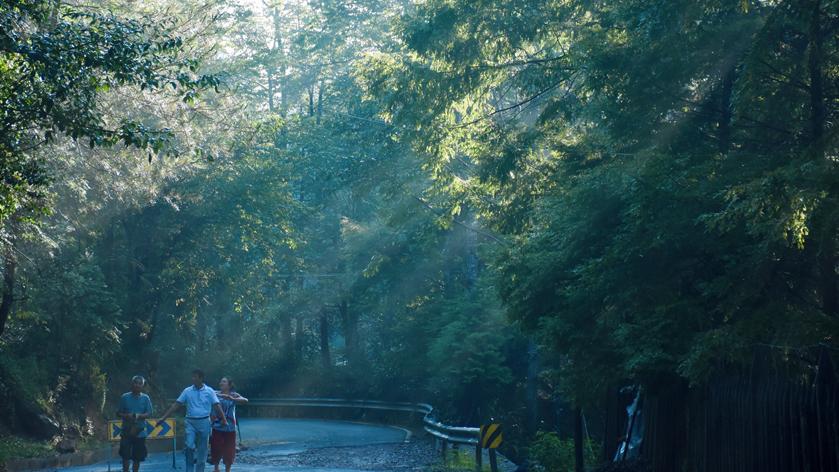 这片隐于丽水最深处的幽林密境,我每年夏天都想去一次