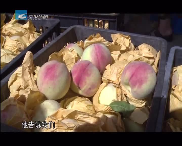 松阳:三都桃子大量上市 桃农抱团闯市场