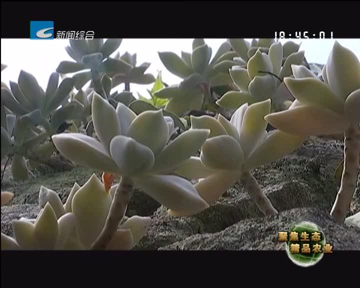 """【聚焦生态精品农业】石头开出""""致富花"""""""