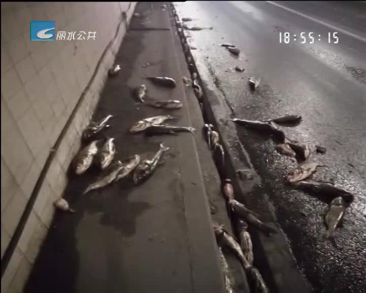 货车爆胎 两千条活鱼撒高速