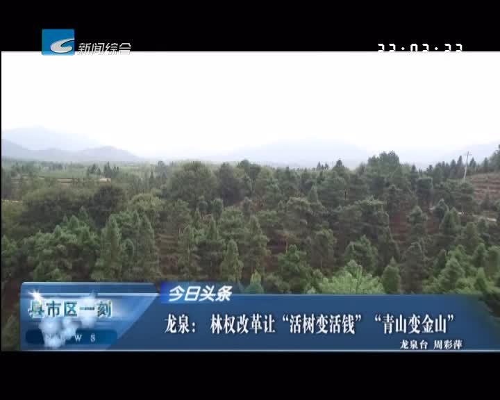 """""""今日头条""""龙泉: 林权改革让""""活树变活钱""""""""青山变金山"""""""