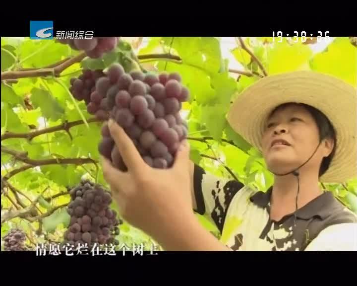 """深刻领悟""""丽水之赞"""" 创新实践""""八八战略"""":丽水:当好绿色农业示范生 引领长江经济带现代农业发展"""