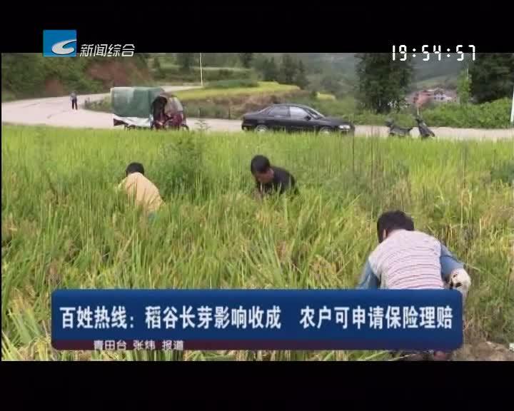 百姓热线:稻谷长芽影响收成 农户可申请保险理赔