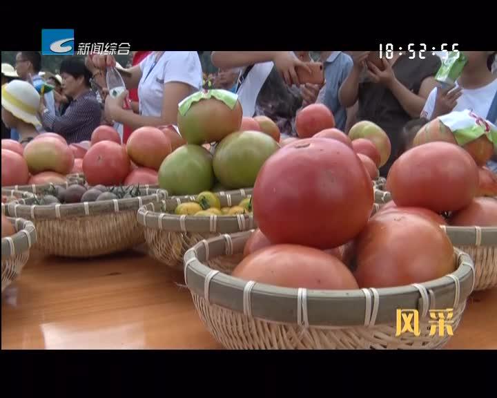 【风采】希望的田野——云上的番茄
