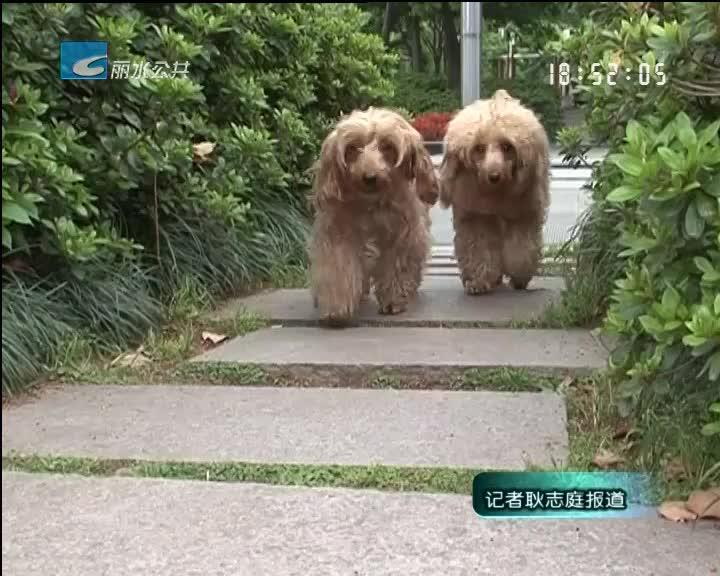 【世界狂犬病日】我市每年有两万多人被狗咬伤