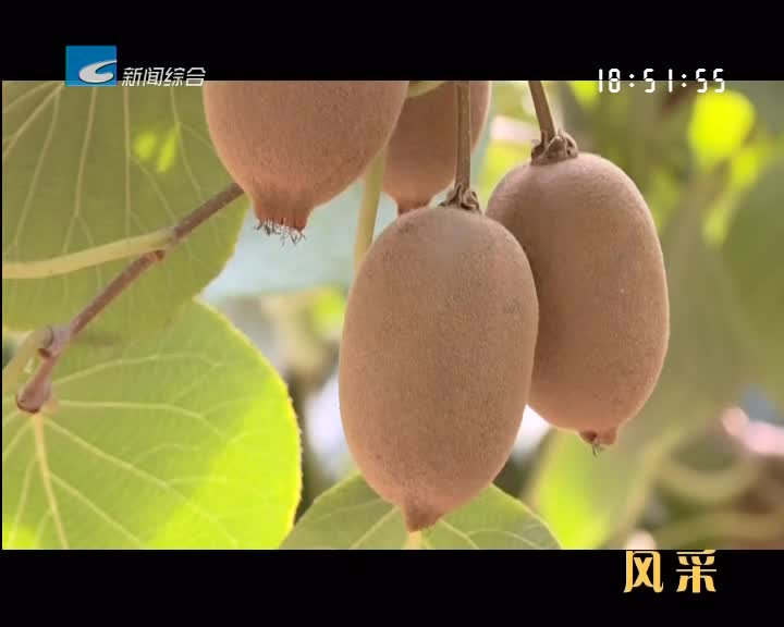 """【风采】龙泉城北:猕猴桃种出好风景 卖出好""""钱景"""""""
