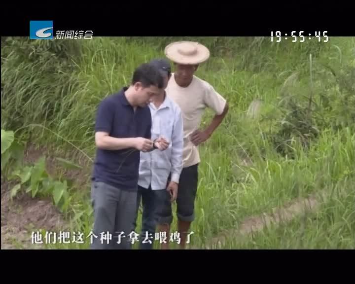 """振兴路上的乡村故事:冯元新:扎根青田""""小西藏"""" 用科技助推产业兴旺"""