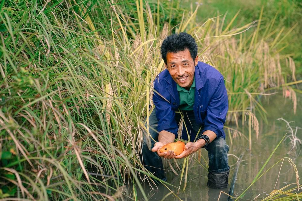 尝新米 吃田鱼  秋天就该去一趟龙现村