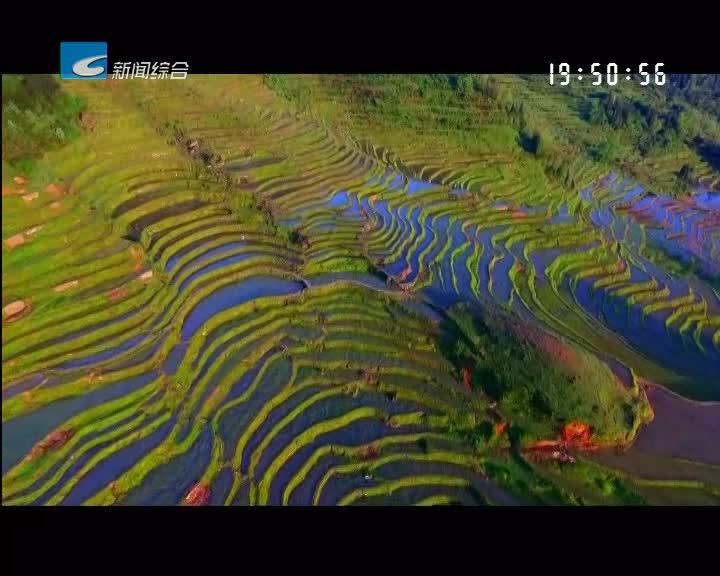 特色稻米丽水香:五彩梯田米:大自然描绘的珍馐美味