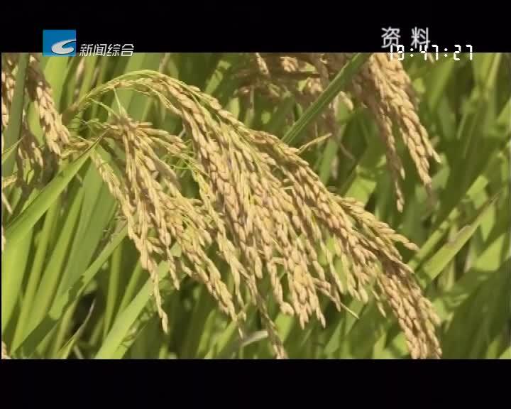 稻田综合种养生产技术 助推丽水米农种出好稻米