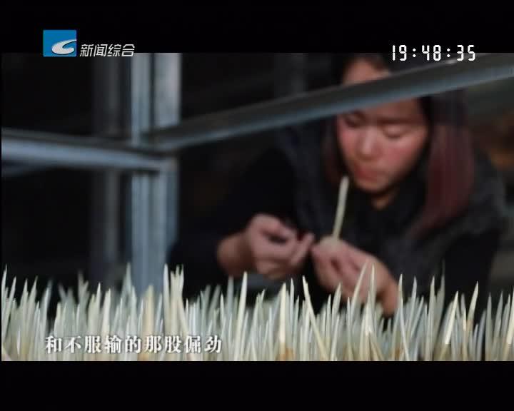 振兴路上的乡村故事:吕晓芳:种植名贵中药材 打造科普休闲基地