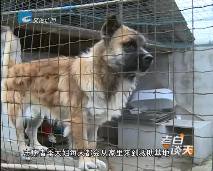 连续报道《流浪狗去哪里了》之一:志愿者照顾流浪狗