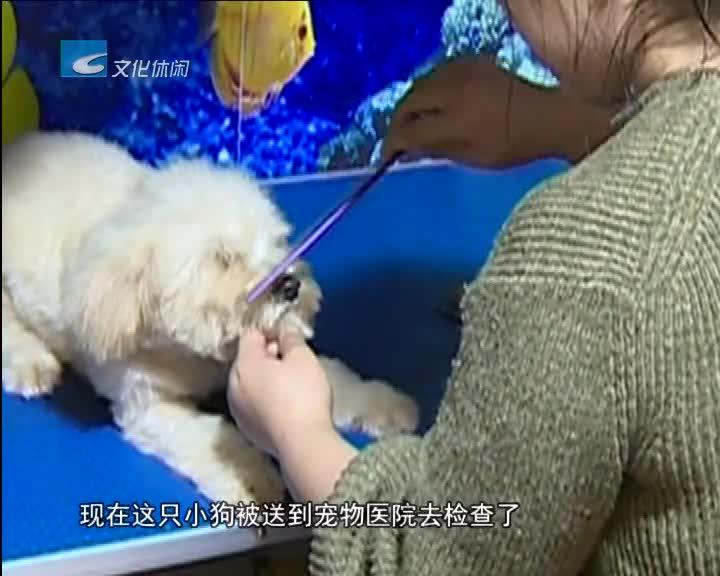 连续报道《流浪狗去哪里了》之二:志愿者希望有人领养流浪狗