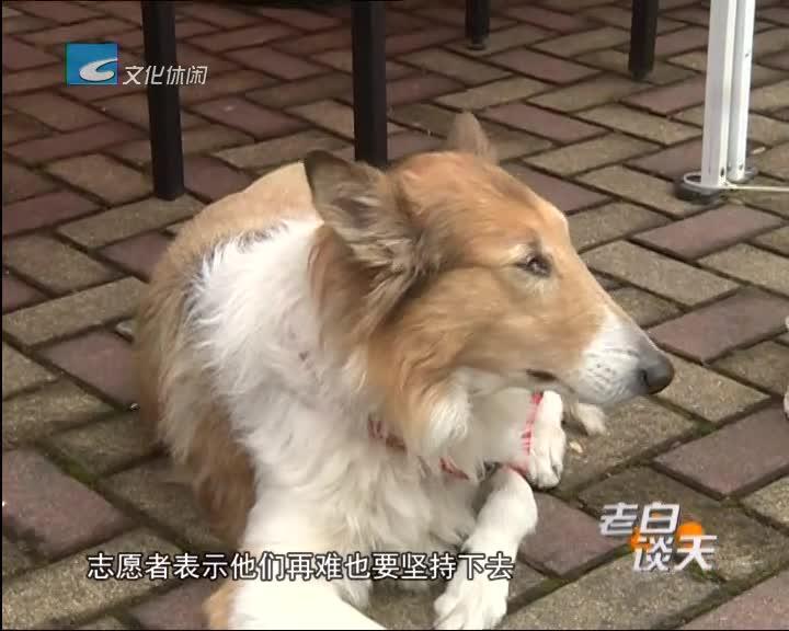 连续报道《流浪狗去哪里了》之三: 志愿者呼吁宠物饲养者要有责任心