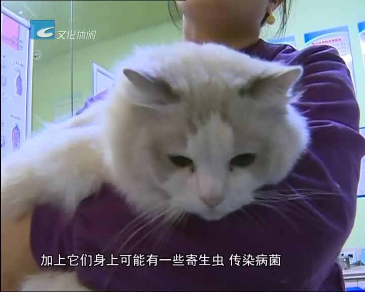 好心救猫反被咬 科学施救很重要