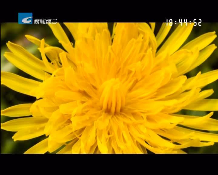 【寻味】轩德皇菊 自然的馈赠