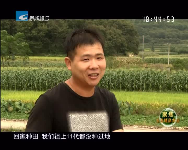 【聚焦生态精品农业】洪碧伟  巧用一株百合撬动千万经济
