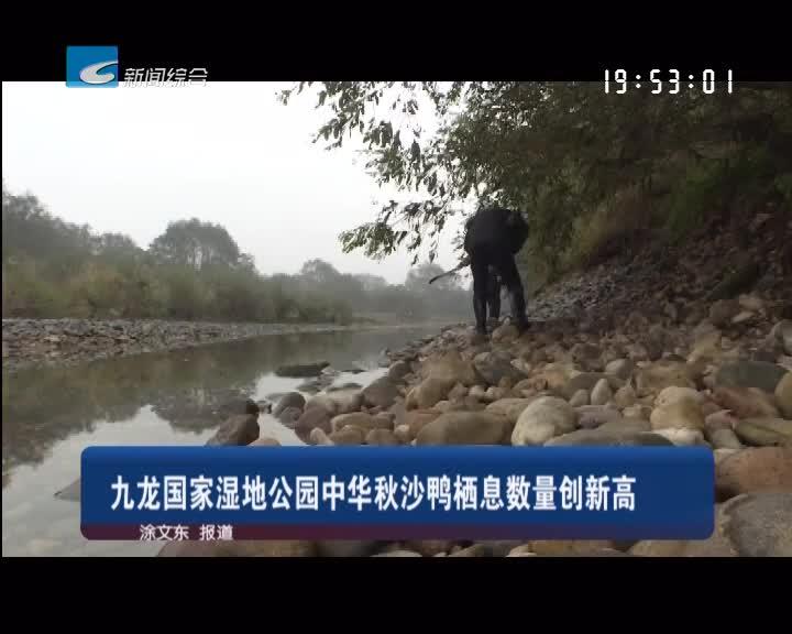 九龙国家湿地公园中华秋沙鸭栖息数量创新高