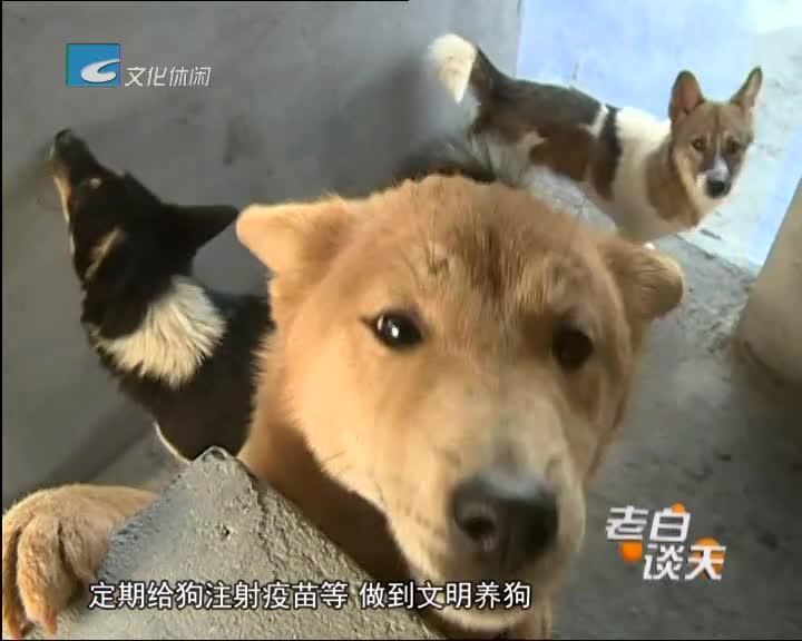 市区开展文明养犬志愿者宣传活动