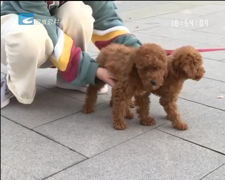 本月起 市区整治不文明养犬行为
